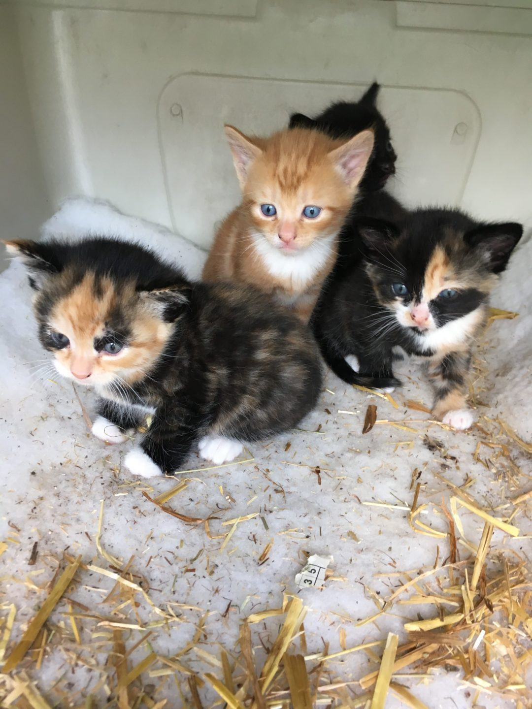 Growing Support For Compulsory Neutering Of Pet Cats The