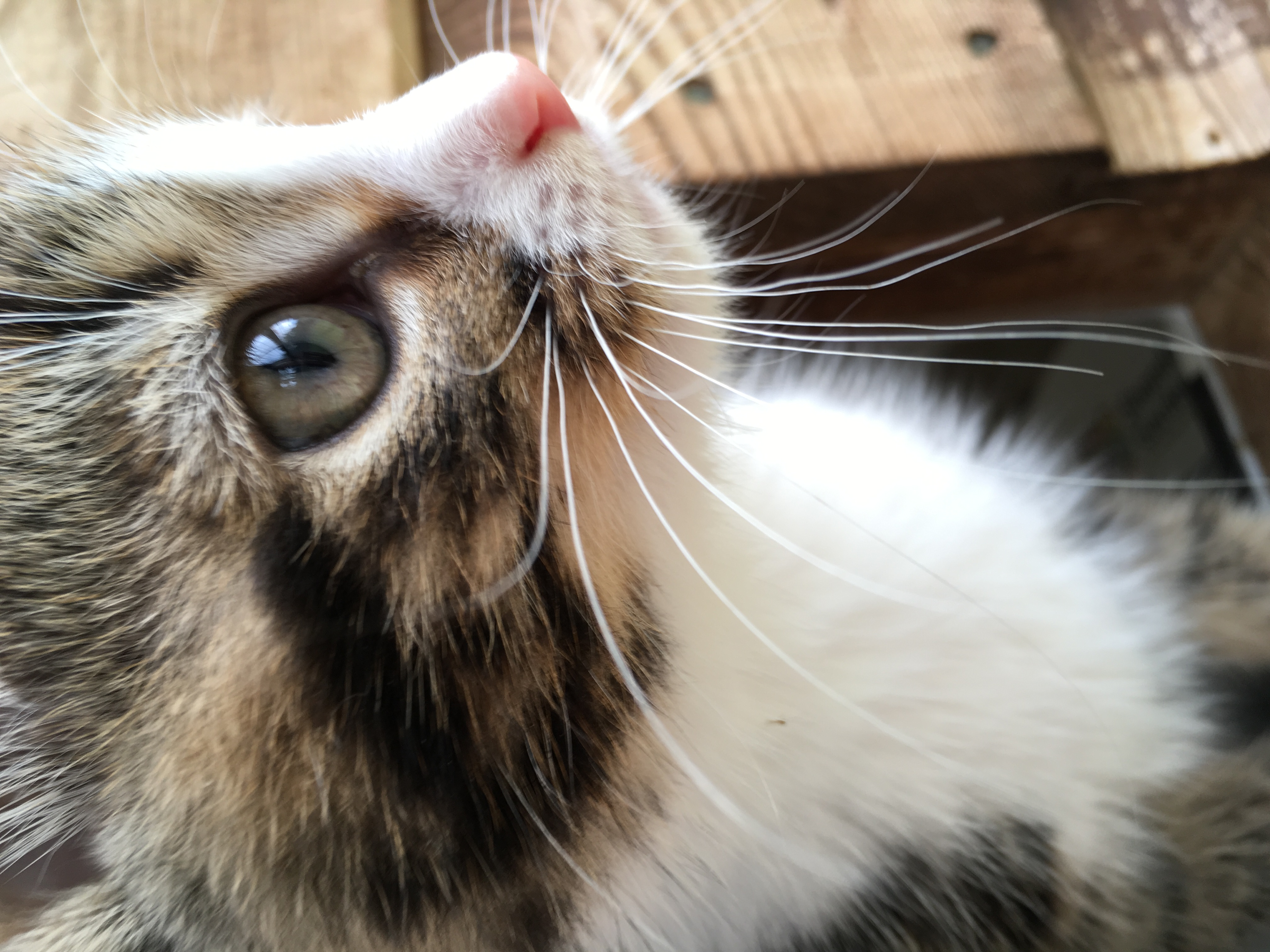 Kitten-close-up-photo-thanks-to-Elspeth-Stirling
