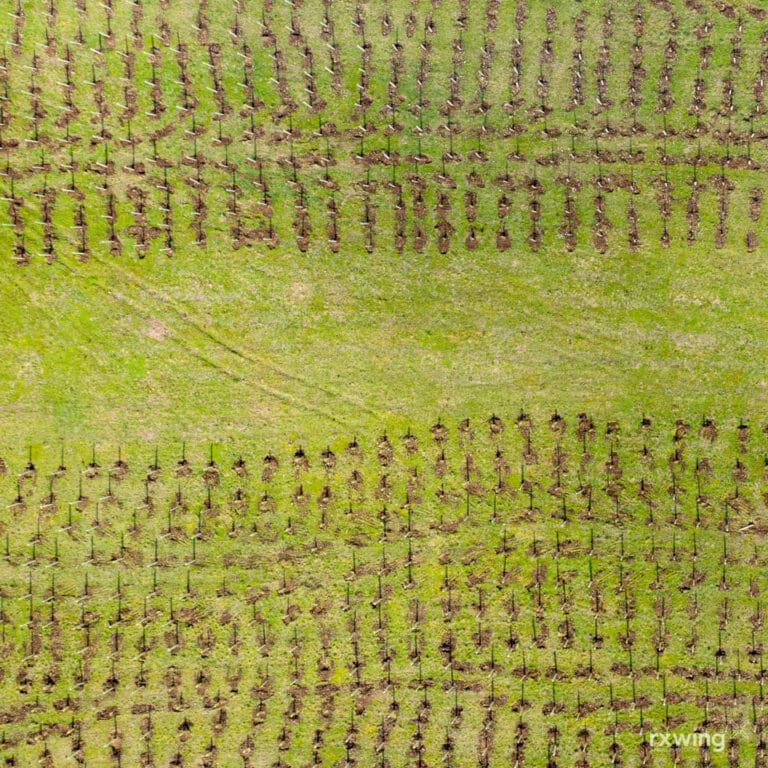Replanting, Perthshire