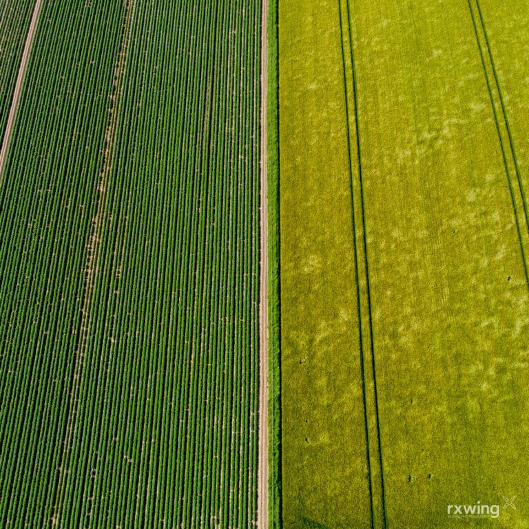 Potatoes & Barley, Perthshire