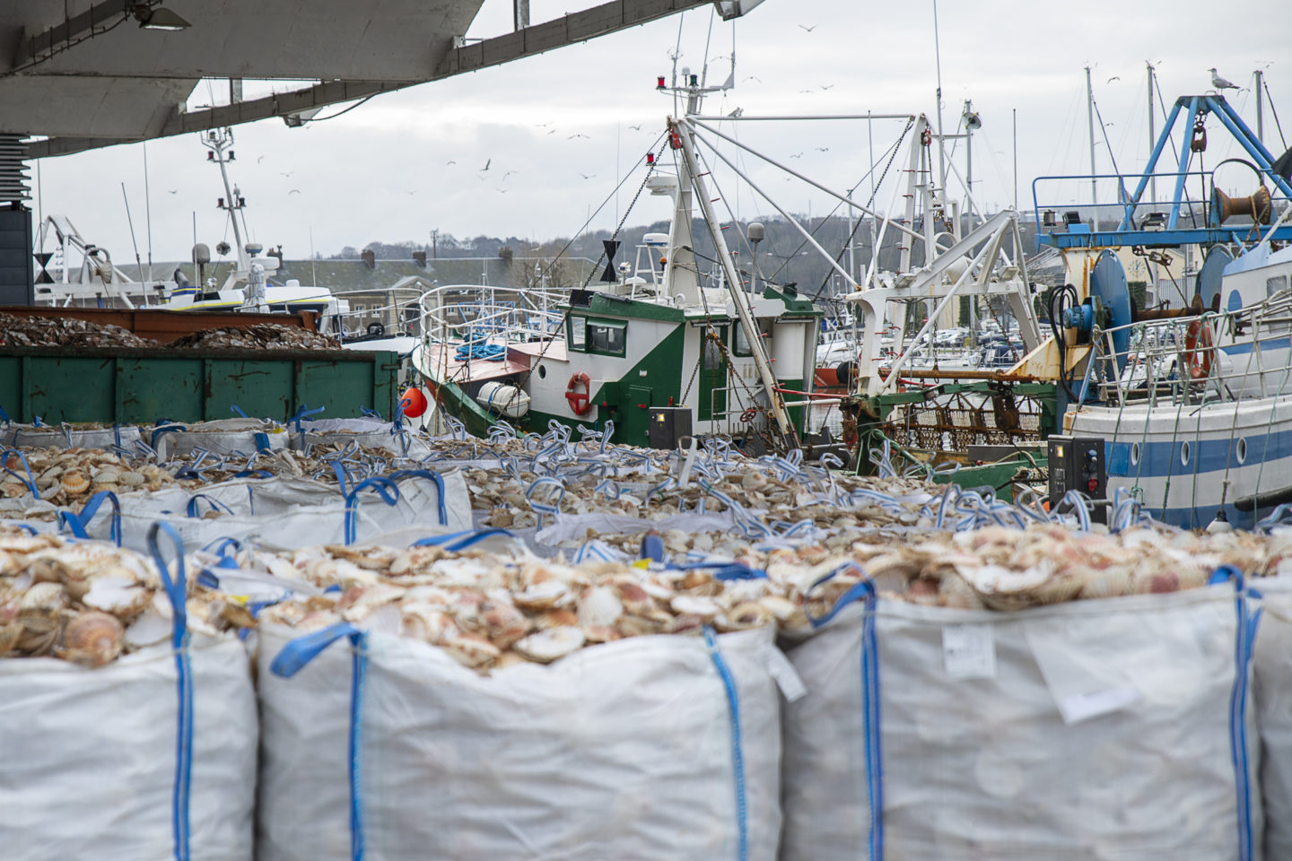 Fines to rogue fishermen fall and illegal fishing escapes prosecution 6