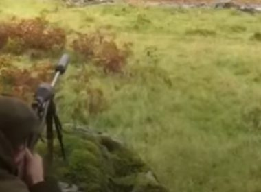 stag cull video