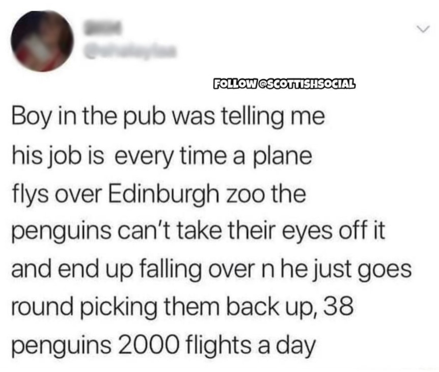 """Boy in the pub was telling me his job is every time a plane flys [sic] over Edinburgh zoo the penguins can't take their eyes off it and end up falling over n [sic] he just goes round picking them up, 38 penguins 2000 flights a day."""""""